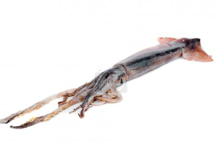 Nice fresh squid isolated on white background...