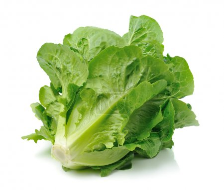 Photo for Cos lettuce isolated on white background - Royalty Free Image