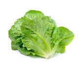 Cos vegetable