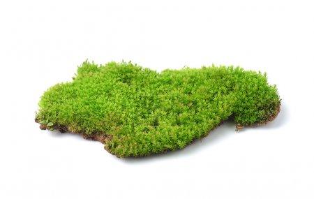 Photo pour Mousse verte isolée sur fond blanc - image libre de droit