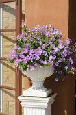 čerstvé květiny v květináčích v zahradě