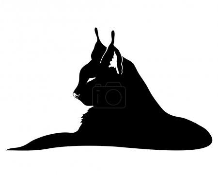 Illustration pour Signe vectoriel. Lynx isolé sur blanc . - image libre de droit