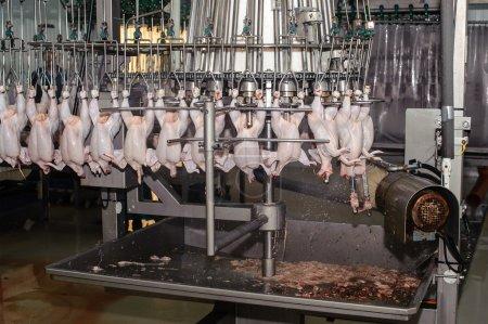 Photo pour Gros plan de transformation dans l'industrie alimentaire de la volaille - image libre de droit