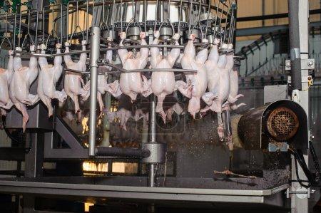 Photo pour Détail de l'industrie alimentaire avec la transformation de viande de volaille - image libre de droit