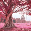 Swing on tree, pink imagine forest...