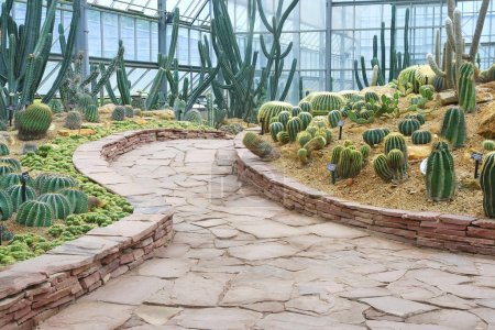 Walkway and cactus garden
