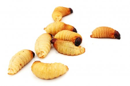 Sago worm larvae insect asian food isolated white background