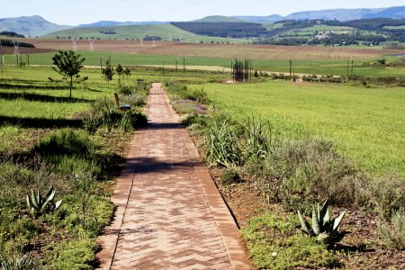Paved Pathway Leading to Metal Sculpture of Nelson Mandela