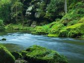 Pohled na horské bystřiny v pískovcových rokle a pod zelené větve acacias, buků a dubů. hladina vody je zelené odrazy. na konci léta na horské řece