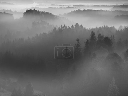 Iew into deep misty valley in Bohemian national park, Europe. Trees increased from foggy background. Black and white picture.