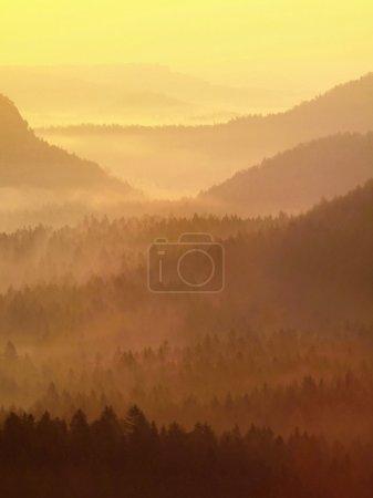 Photo pour Or aube embrumée dans une belle vallée du parc Suisse de Saxe. pics de grès est passés de brume, le brouillard est de couleur bleu, or et orange. - image libre de droit