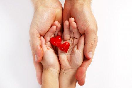 Photo pour Des mains de bébé et de l'homme tenant deux coeurs rouges sur place palmier sur fond blanc. - image libre de droit