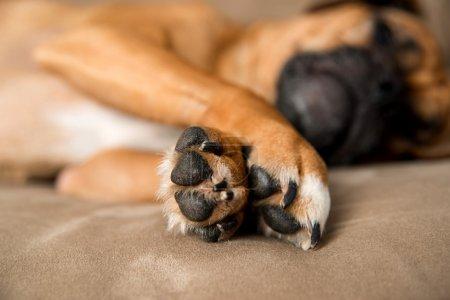 Closeup of Dog's Paws