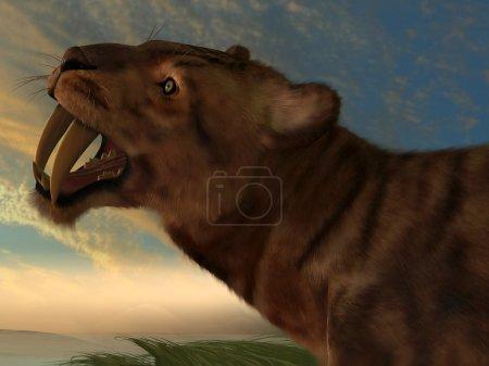 Smilodon Cat