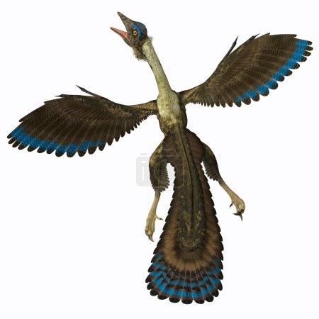Archaeopteryx on White