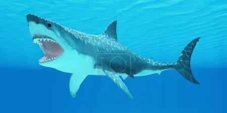 Photo pour Le grand requin blanc peut vivre pendant plus de 70 ans et atteindre une longueur de 8 mètres ou 26 pieds. - image libre de droit