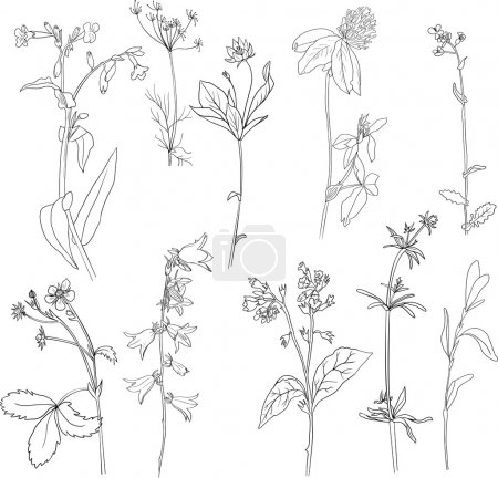 Illustration for Set of line drawing herbs, vector illustration - Royalty Free Image