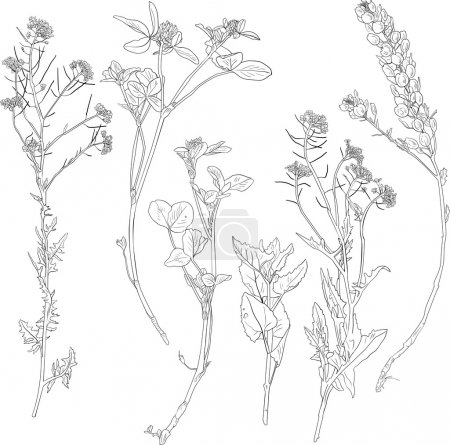 Set of line drawing herbs and flowers