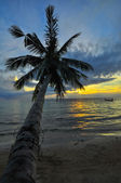 Coconut palms on sand beach in tropic on sunset. Thailand, Koh C