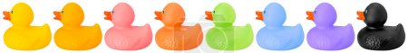 Toy rubber colored ducks isolated on white right side