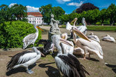 Pelicans in front of the Friedrichsfelde Palace