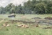 Battlefield after attack