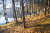 Tree near water lake at sunrise