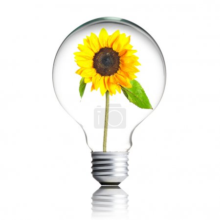 Yellow flower growing inside the light bulb