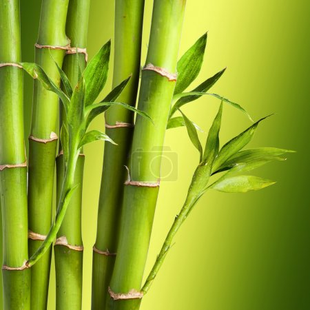 Photo for Fresh Bamboo on colorful background - Royalty Free Image