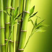 Frischen Bambus
