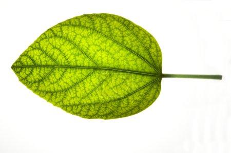 beautiful leaf