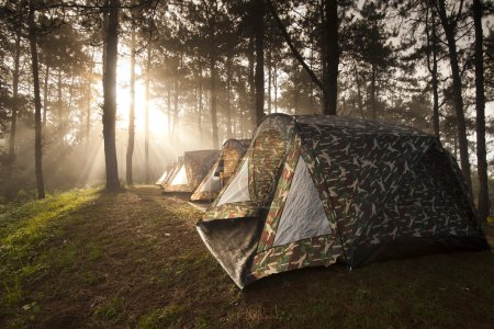 Photo for Ray of sunlight, behind the tree, on misty morning shining on the camping tent - Royalty Free Image