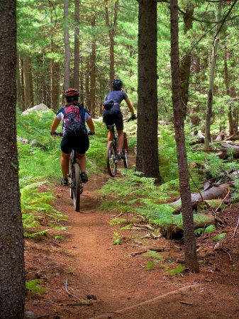 Photo for Two mountain bikers hiking a hill in the forest - Royalty Free Image