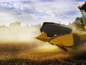 Combiner harvesting the wheat