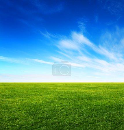 Image du champ d'herbe verte et du ciel bleu vif