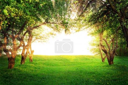 Sun shining through arc of trees