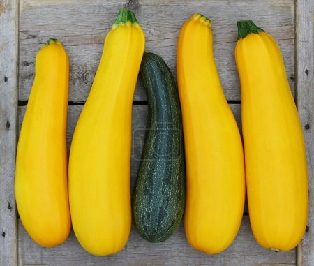 Four brightly yellow zucchini vegetable marrows and one green st