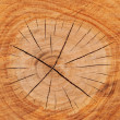 Wood cross section with rings, and the notch....