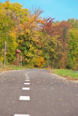 Foto de Ciclismo, tomada en árbol otoñal con acentos amarillos. - Imagen libre de derechos