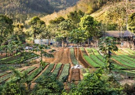 Photo pour Vue frontale large d'une zone agricole au Laos, Asie du Sud-Est . - image libre de droit