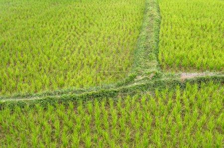 Photo pour Détail d'une rizière à Vang Vieng, Laos . - image libre de droit