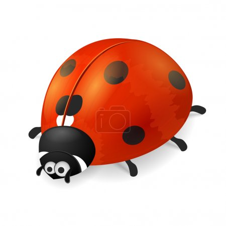 Cute ladybird on white background