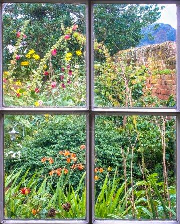 Cottage Garden through an old sash window