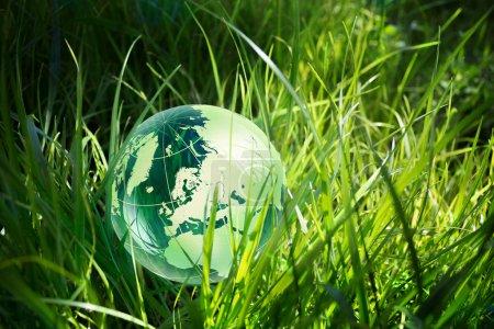 Green globe in grass