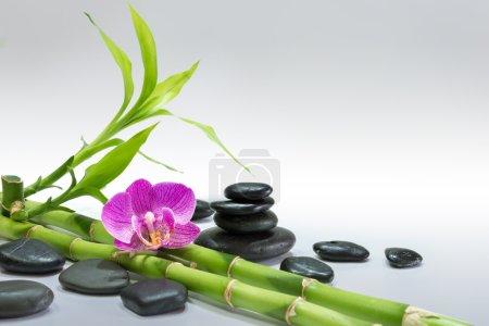 Photo pour Orchidée pourpre avec bambou et pierres noires - fond gris - image libre de droit