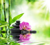 Hintergrund-Spa - schwarz lila Orchideen, Steine und Bambus auf dem Wasser
