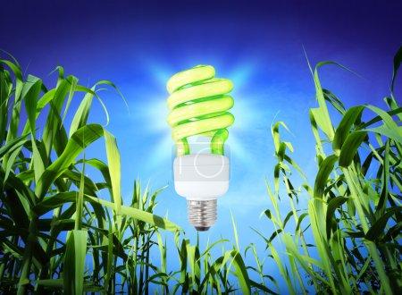 Photo pour Écologie de croissance - Lampe CF - éclairage vert - image libre de droit