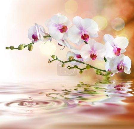 Photo pour Orchidées blanches sur l'eau avec chute - image libre de droit