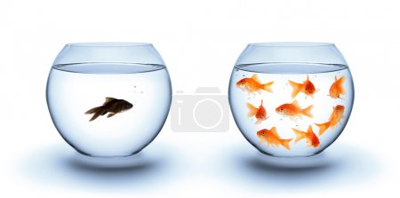 Photo for Fish in solitude - diversity concept, racism and isolation - Royalty Free Image