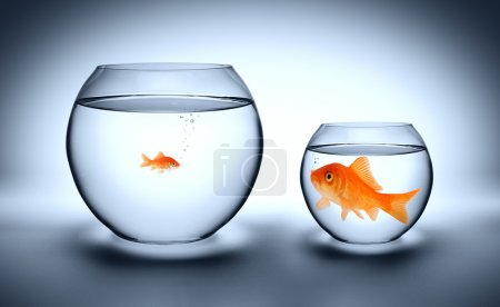 Big goldfish in a small aquarium - outgrown concep...